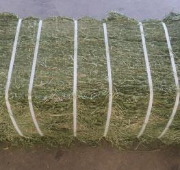 Whole-Log